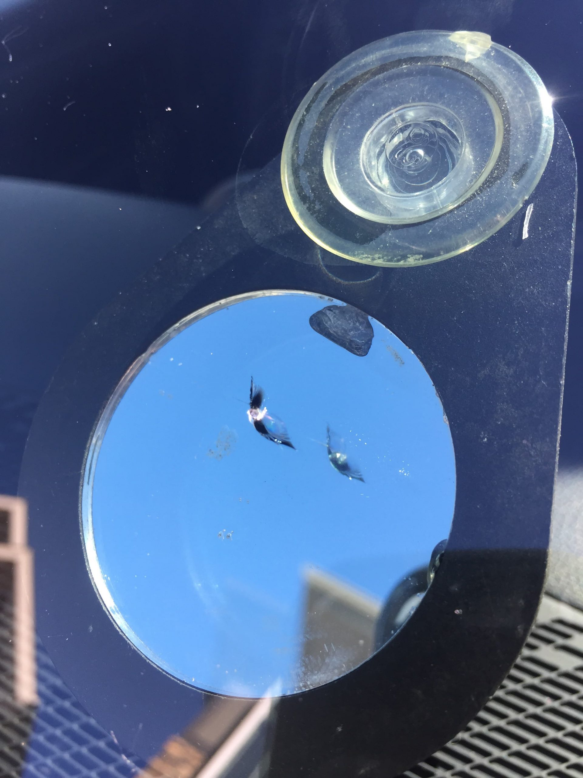 windshield chip - before